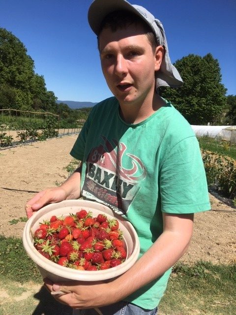 FAM Les Capelières: une belle récolte de fraises